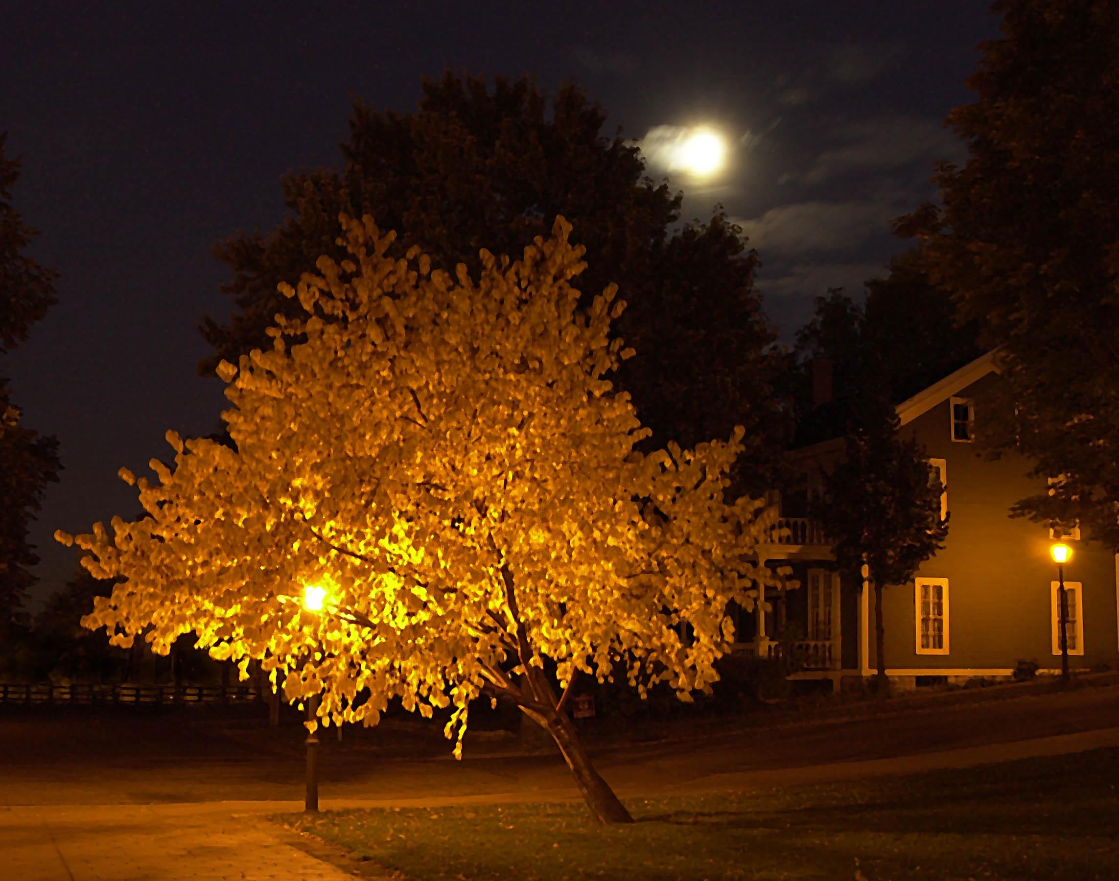 52.Night Tree 01.jpg