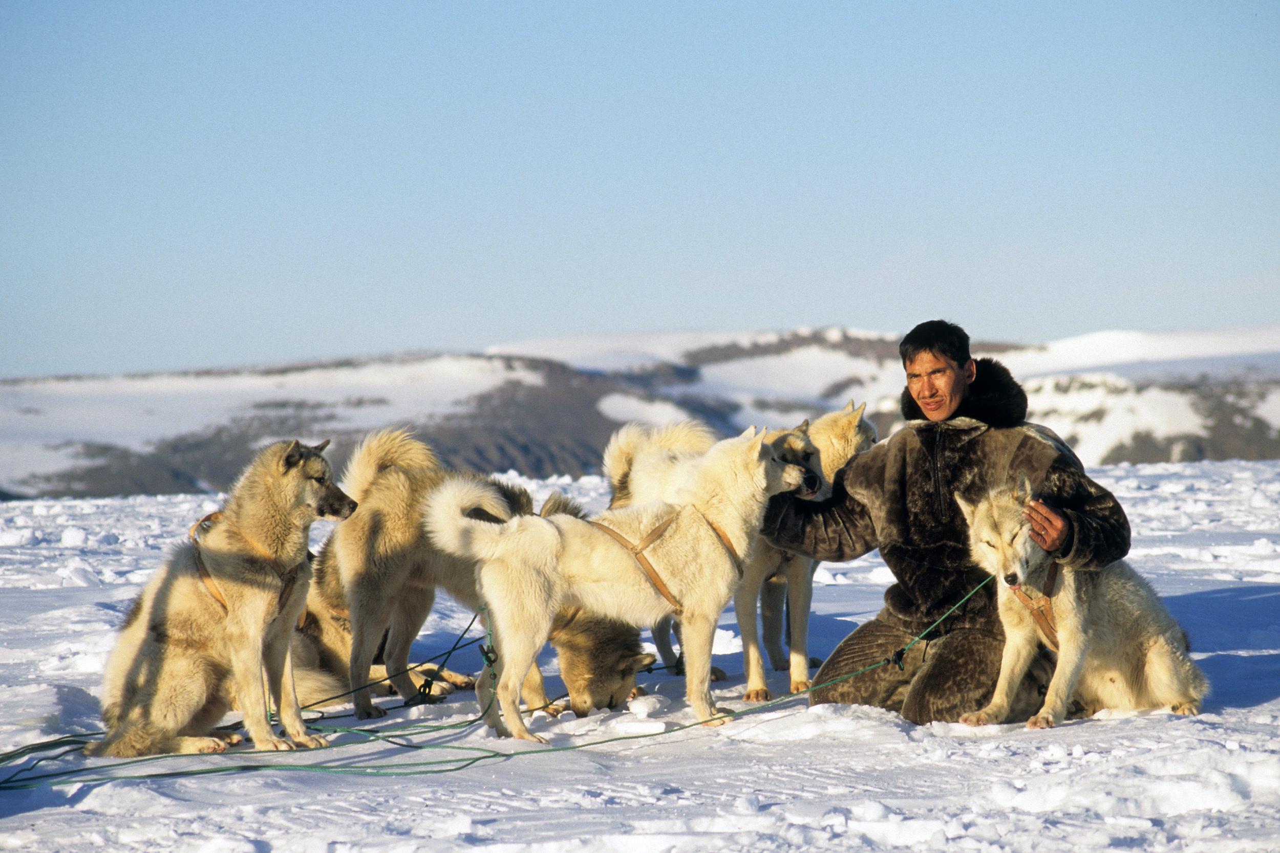 Greenland Dogs.jpg