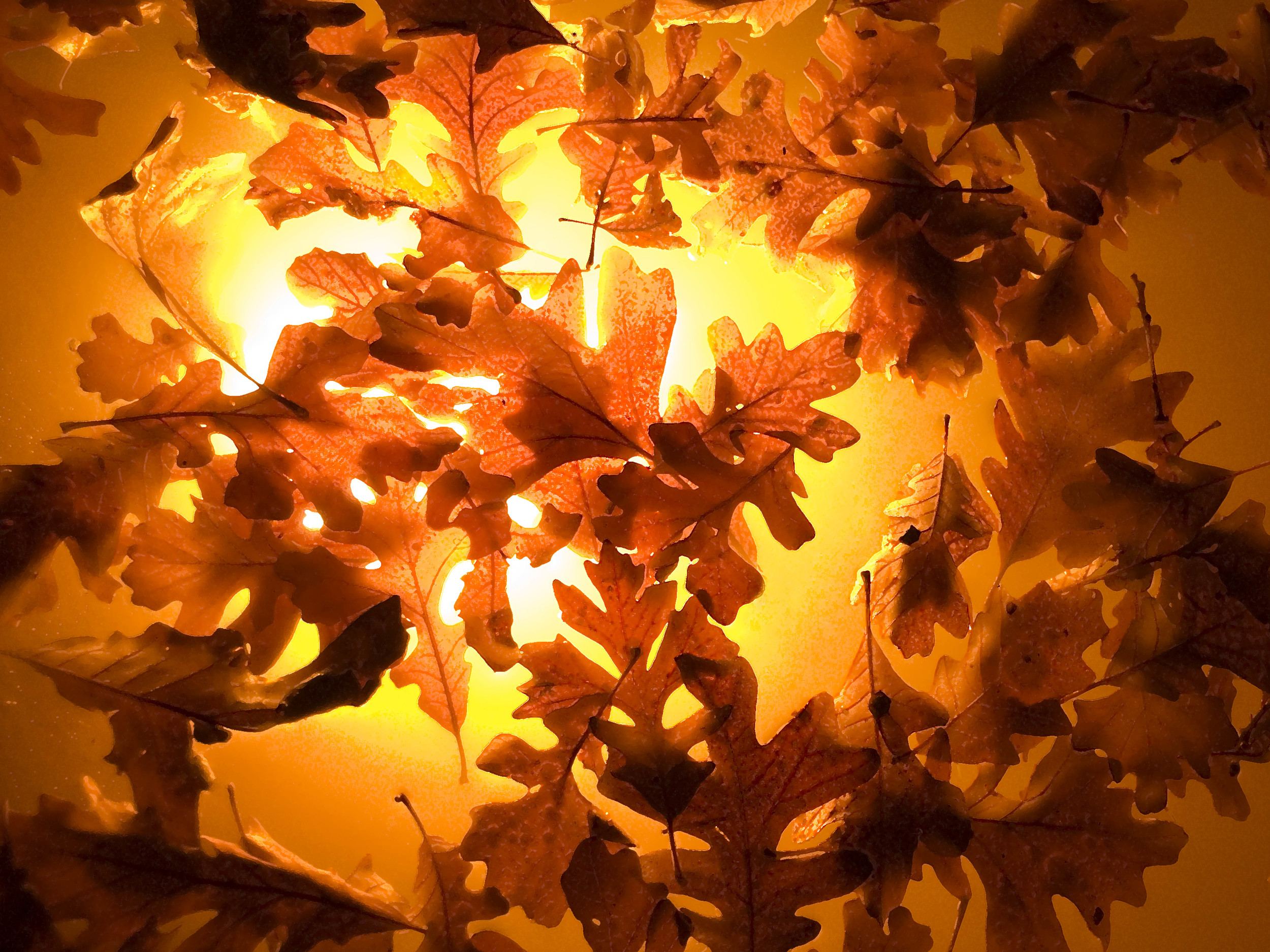 15 x 20 leaves MASTER.jpg