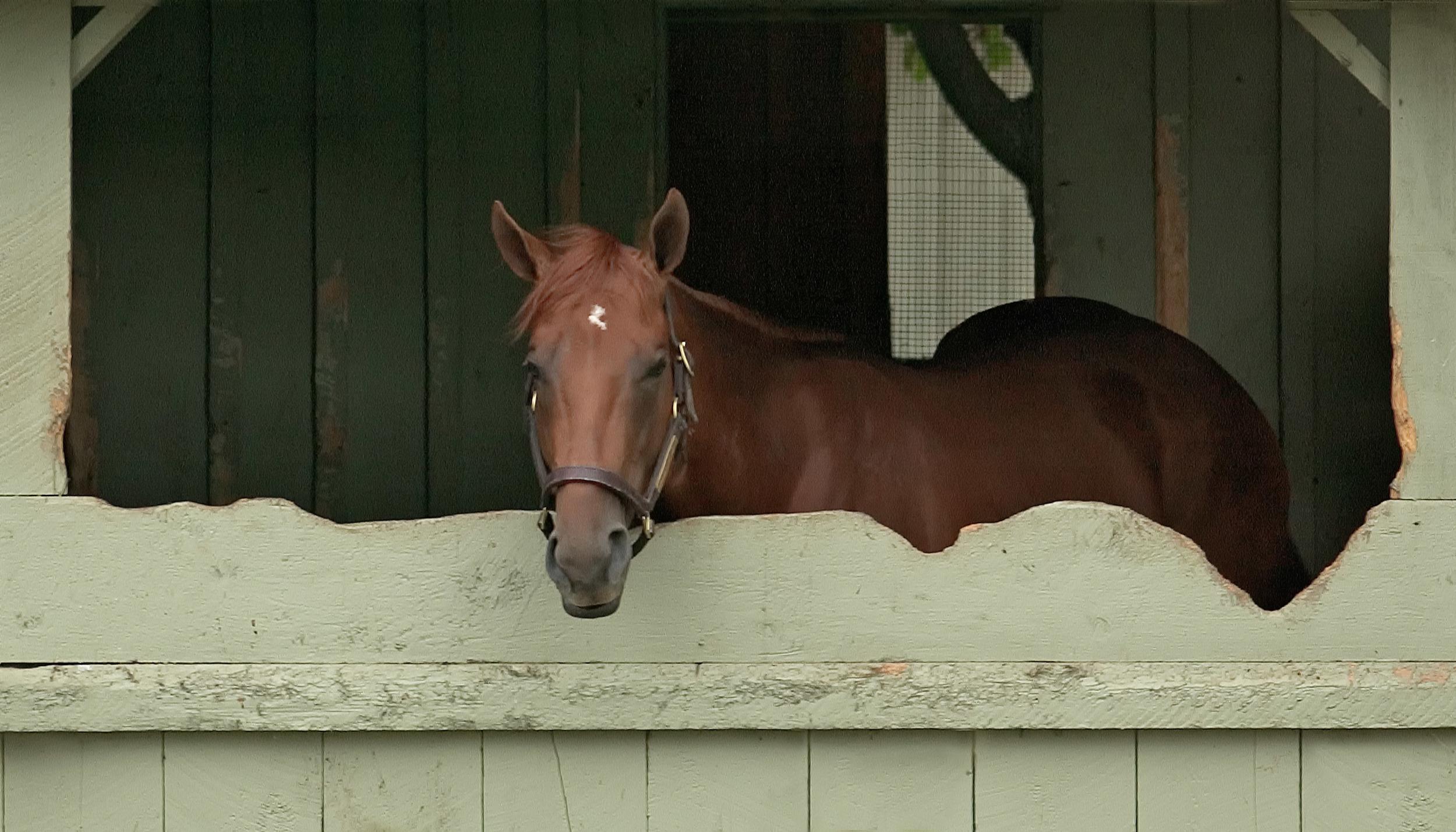 Horse in Stall.jpg