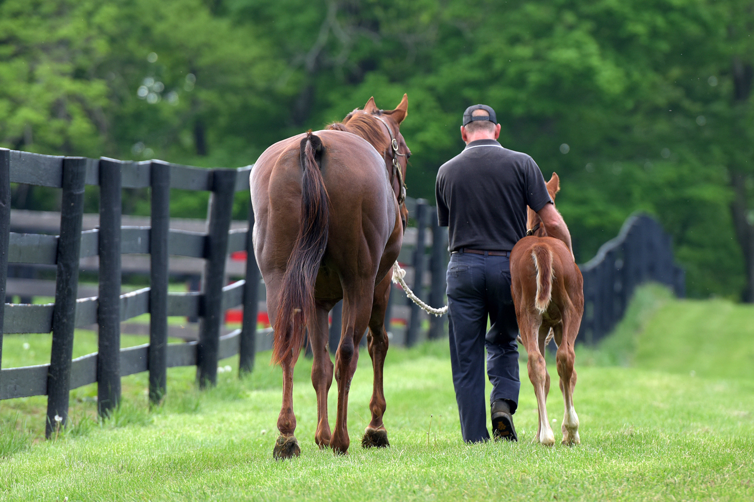 Mare_Foal_Manager_5293.jpg