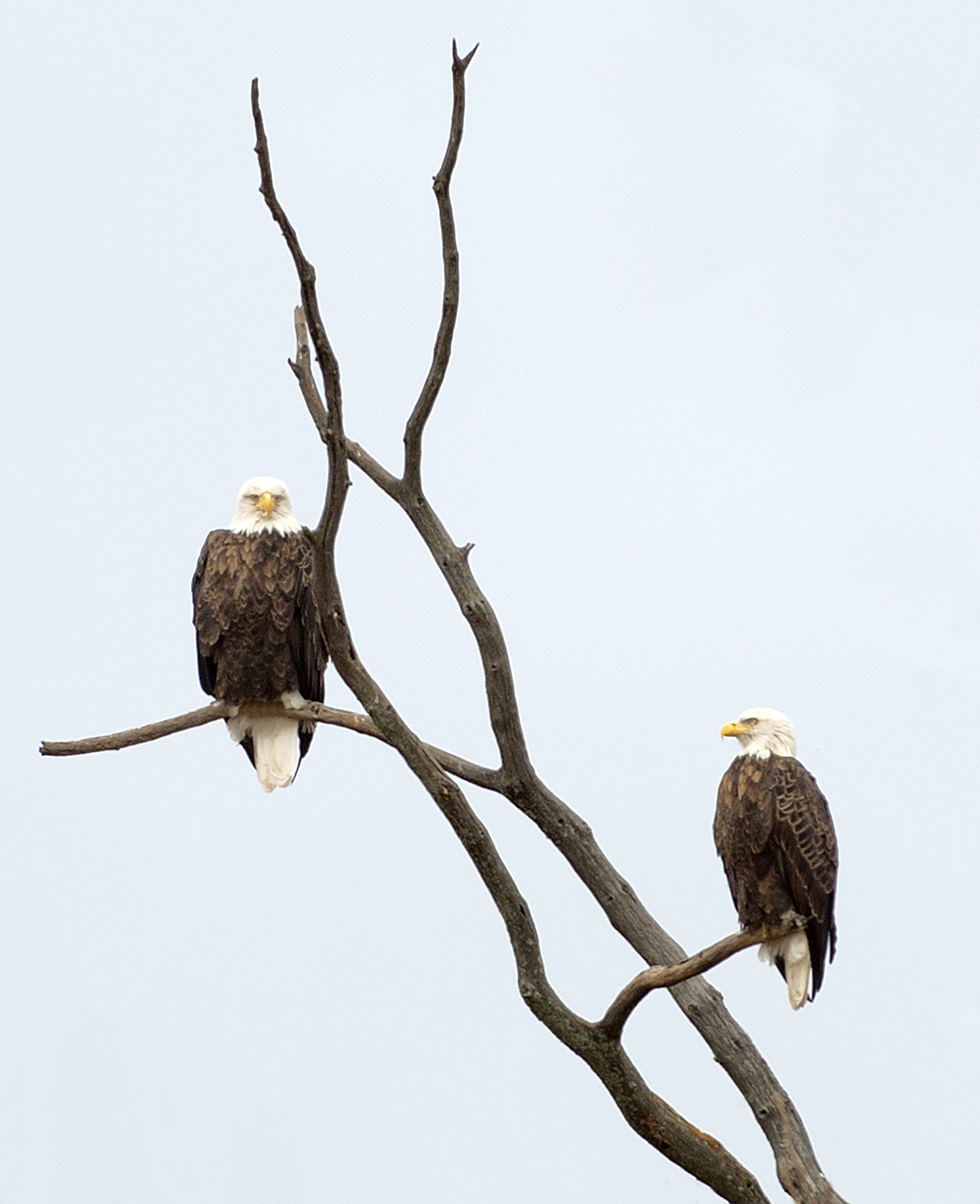 Two Eagles_3323.jpg