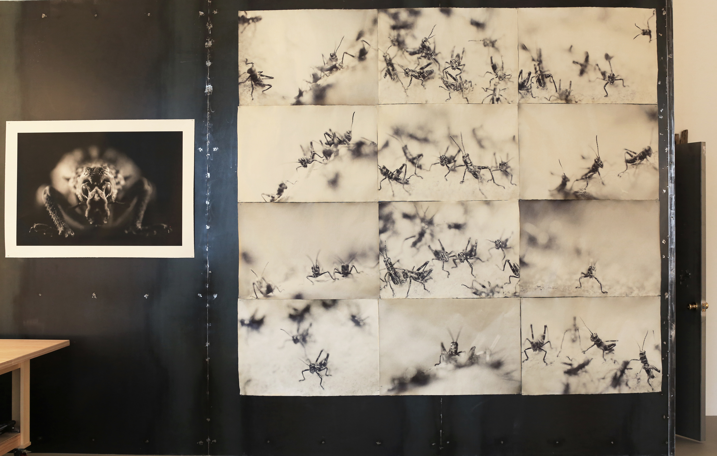 Grasshoppers,  Mana Fine Art, Jersey City.  Iris prints on twelve sheets of handmade Japanese gampi coated in natural beeswax, 111 x 100 inches