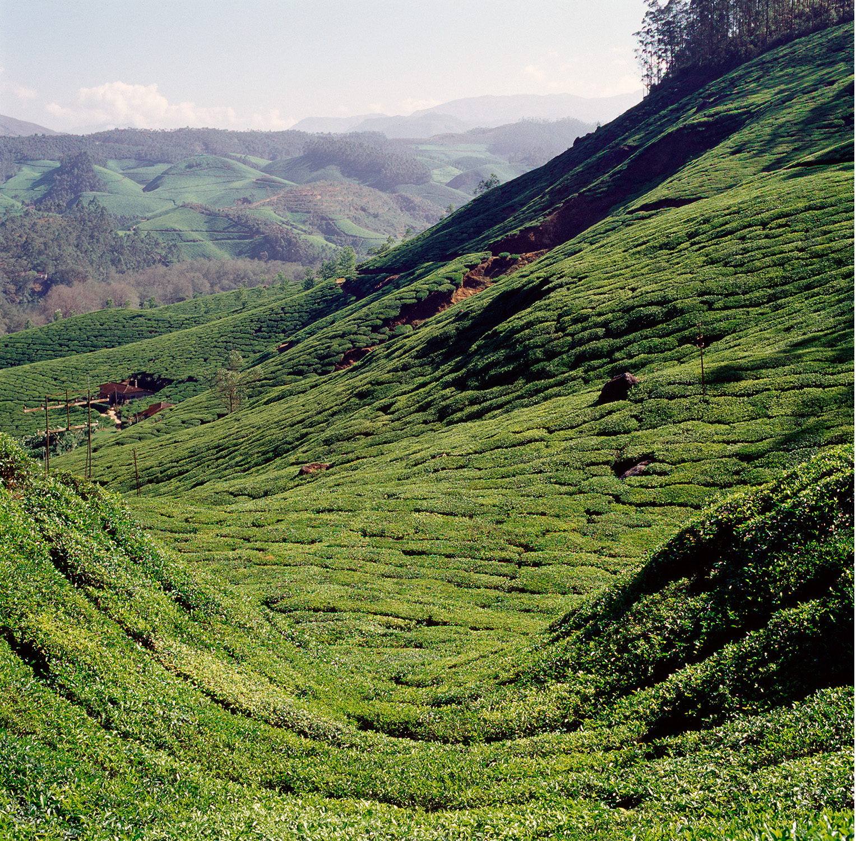 India Tea Mountains Curve.jpg