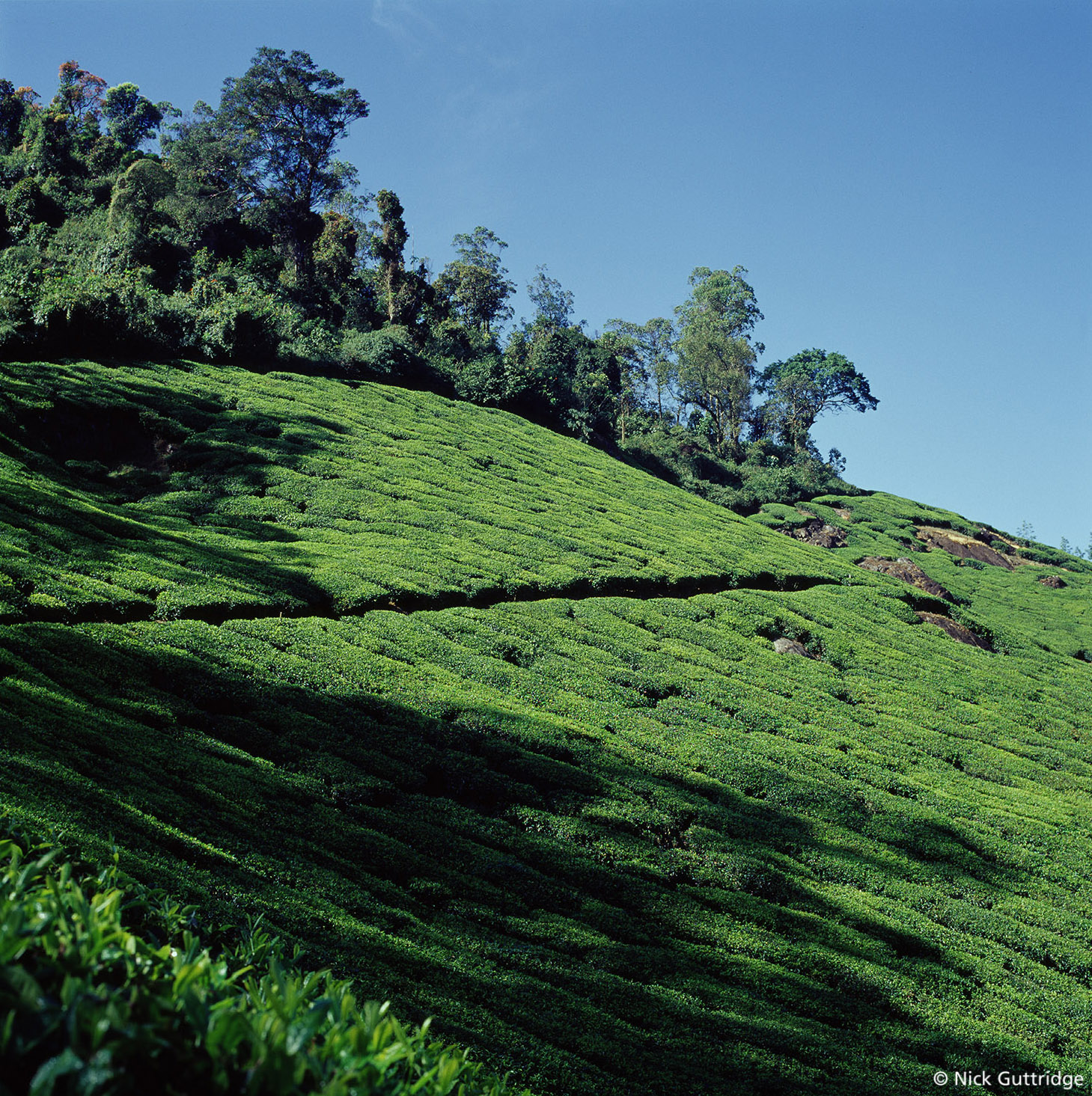 India Tea Mountains Shad.jpg