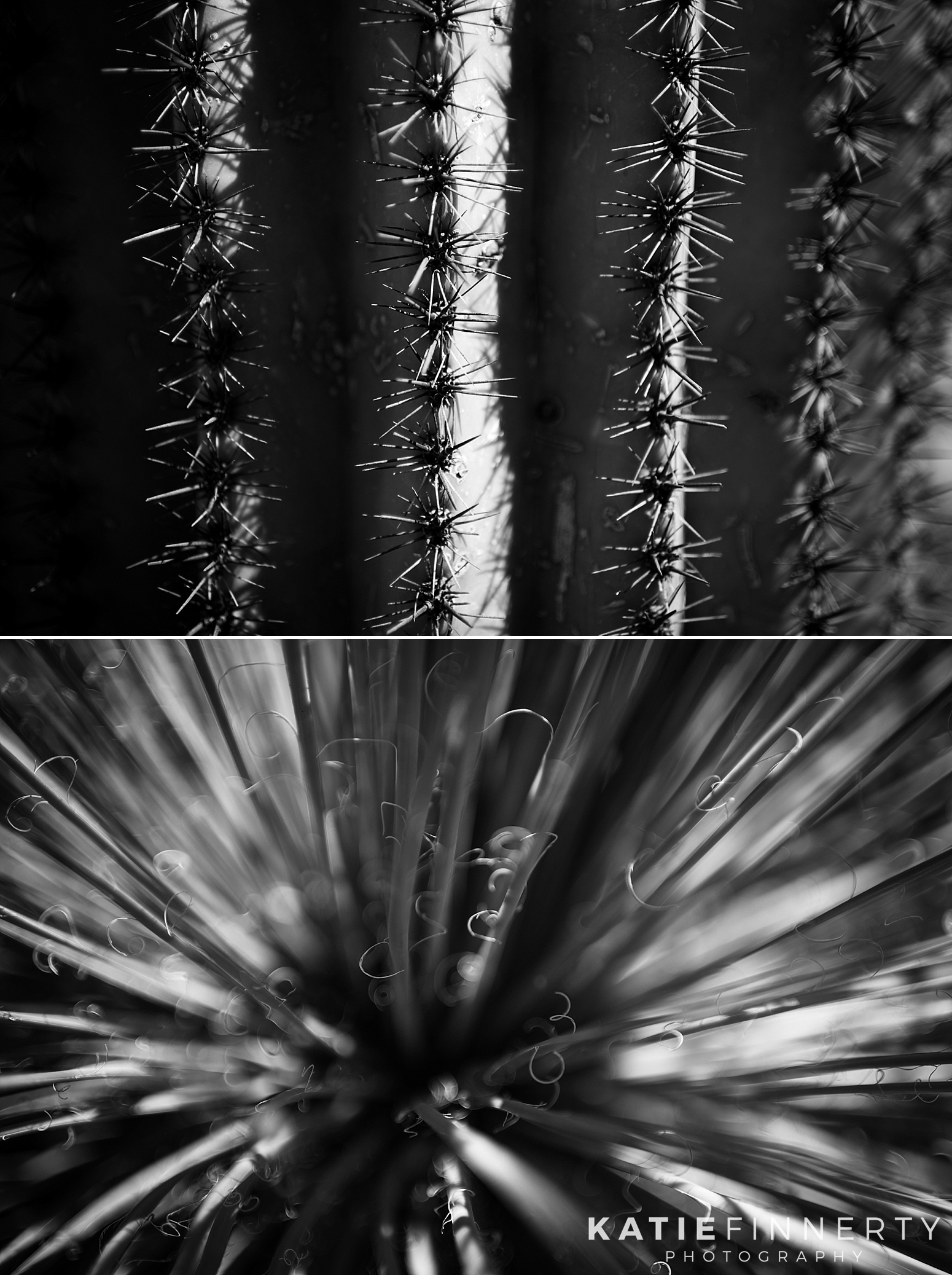Saguaro National Park Plants Travel Photography