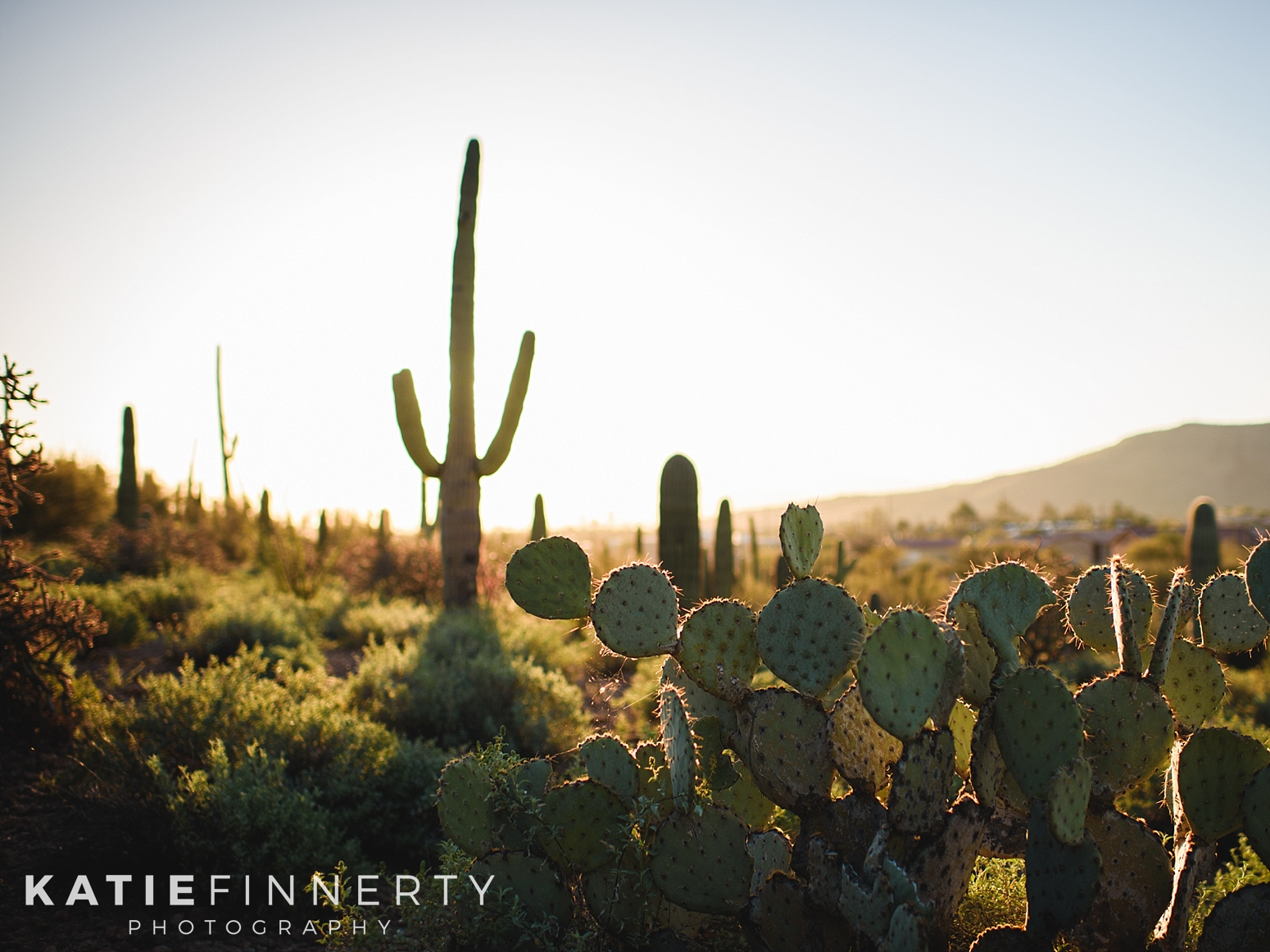 Sunrise Saguaro National Park Landscape Travel Photography