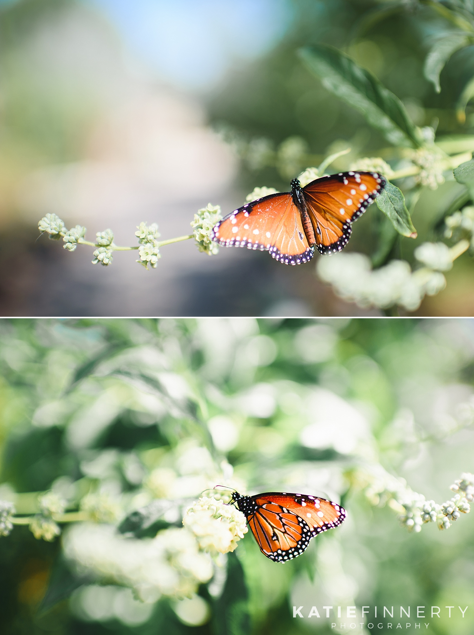 Tucson Botanical Gardens Butterflies Travel Photography