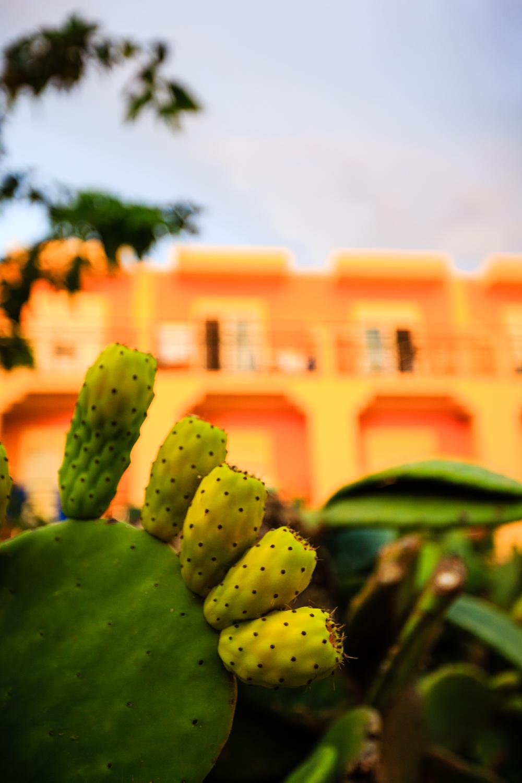 adventure-travel-photography-becky-brockie-greece-cactus.jpg