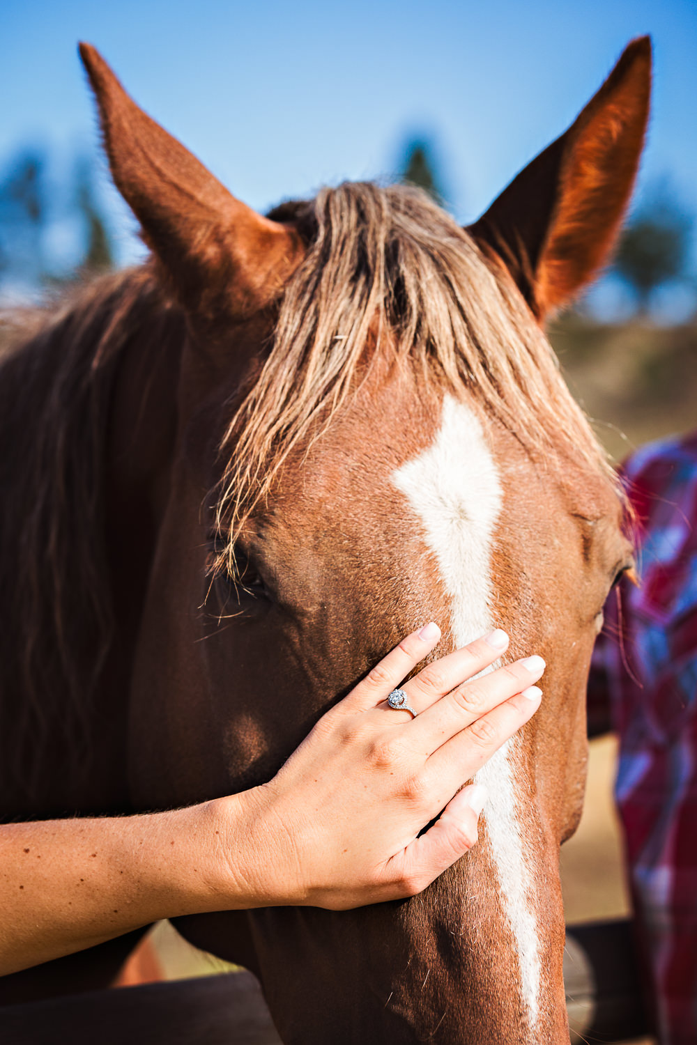 billings-montana-engagement-session-engagement-ring-and-horse.jpg