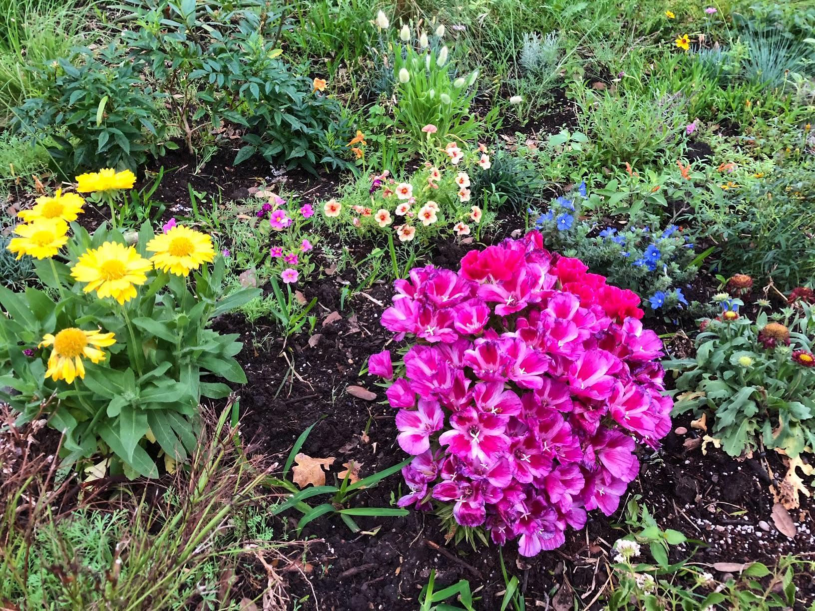 garden-austin.jpg