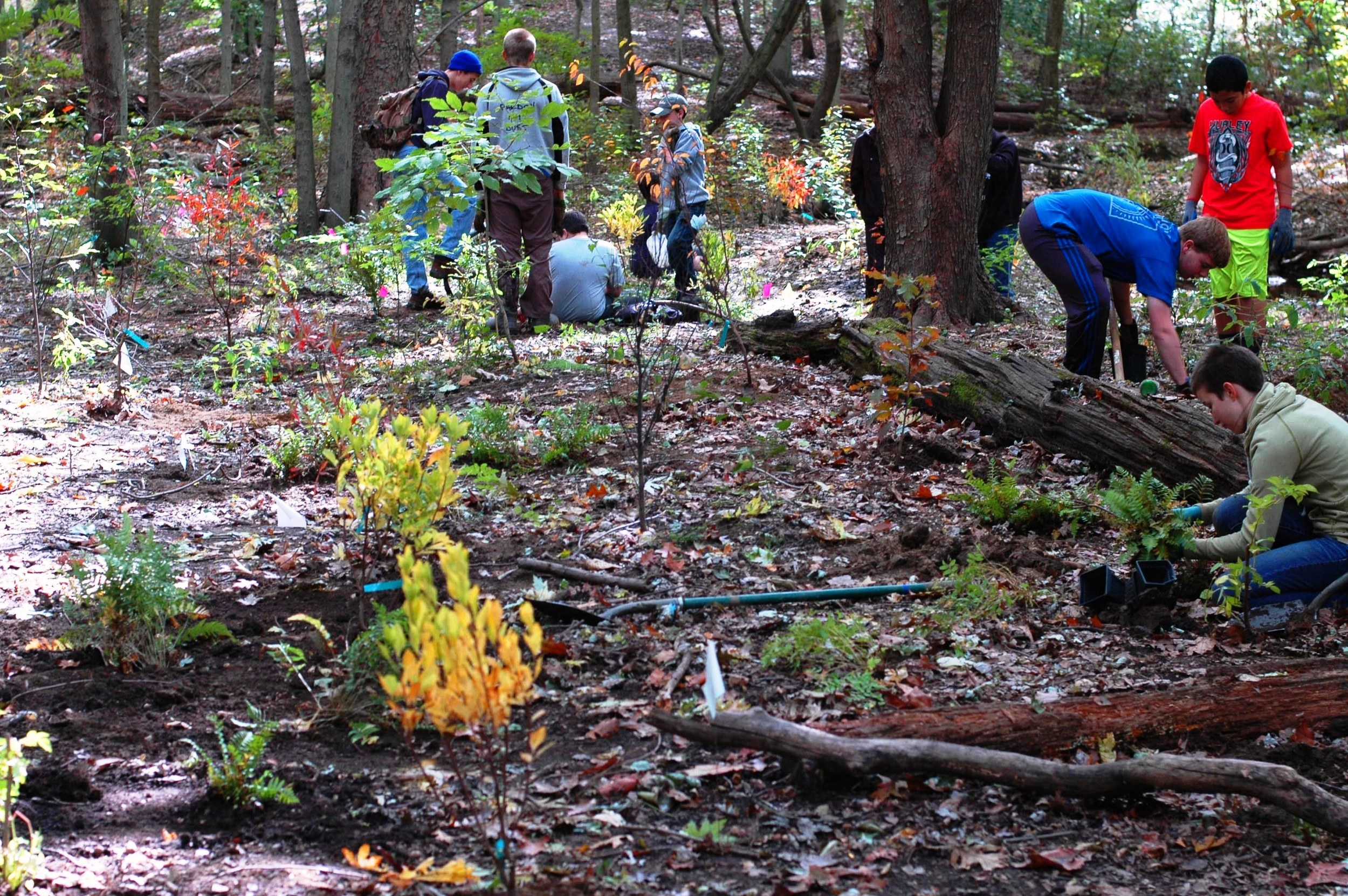 Fall-Stewardship-Day-Stream-Restoration-Planting-2015.jpg