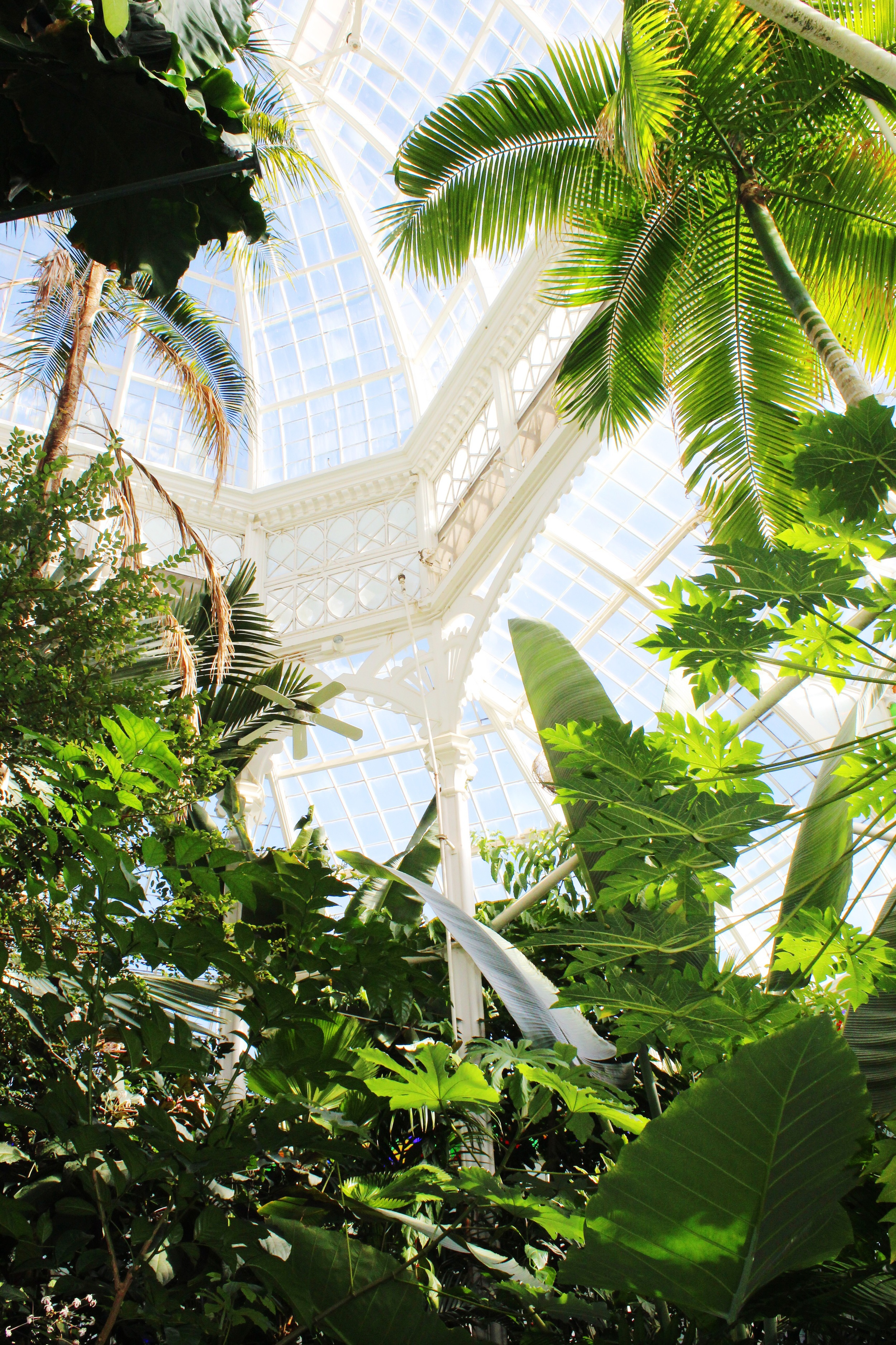 Places: San Francisco Conservatory of Flowers | Sundays and Somedays