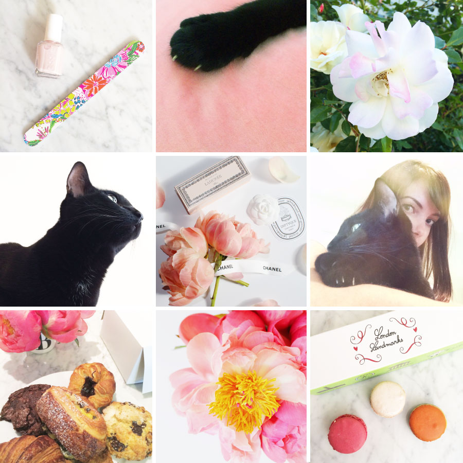 May in Photos - Pink, Peonies, Cats and Lily for Target | Sundays and Somedays