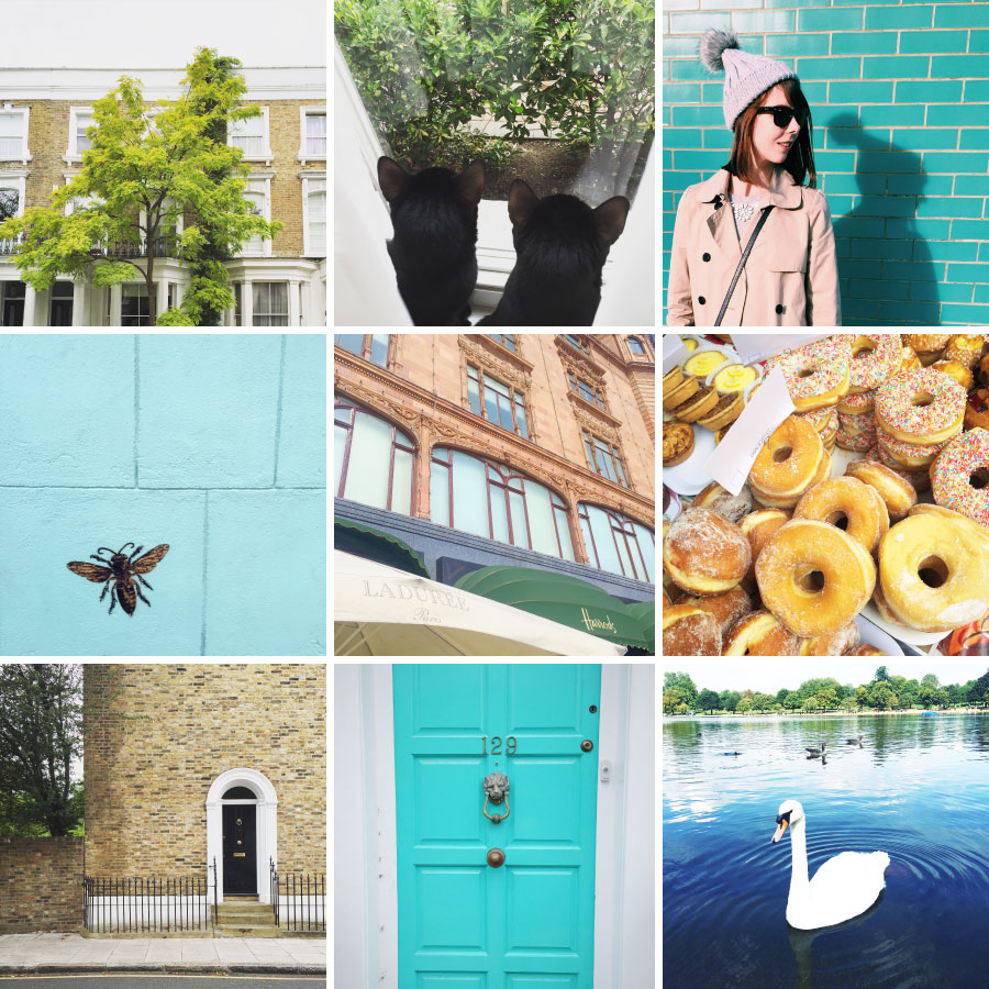 September in photos - swans, turquoise doors, and bees!