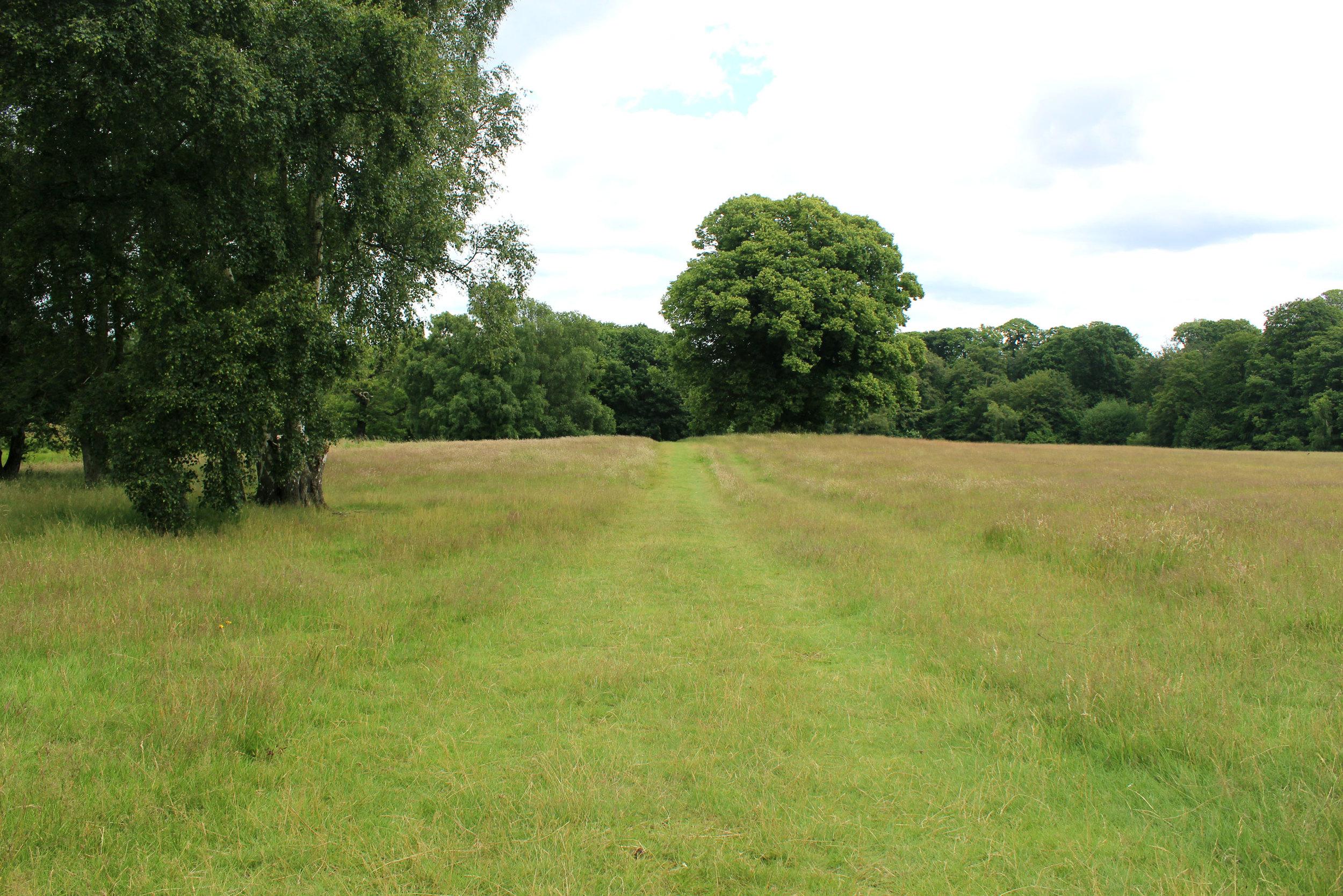 Exploring Hampstead Heath park, London.