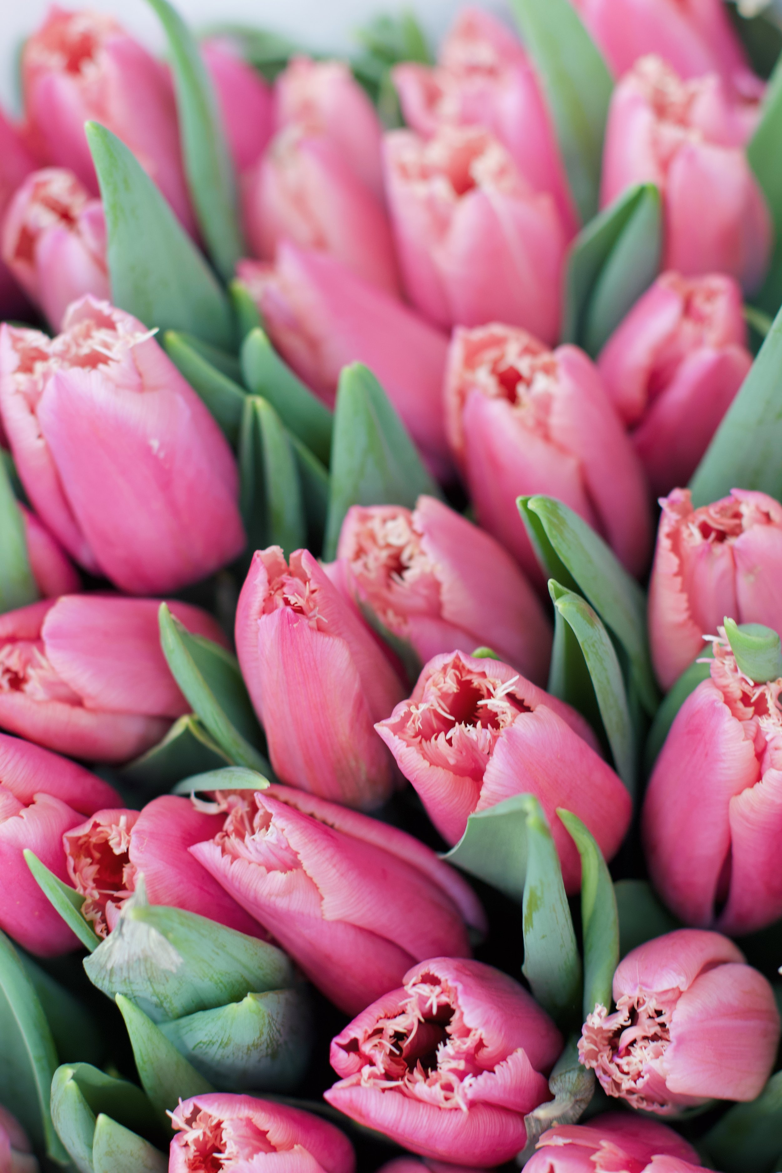 Our Amsterdam itinerary - how to spend a long weekend in Amsterdam during tulip season