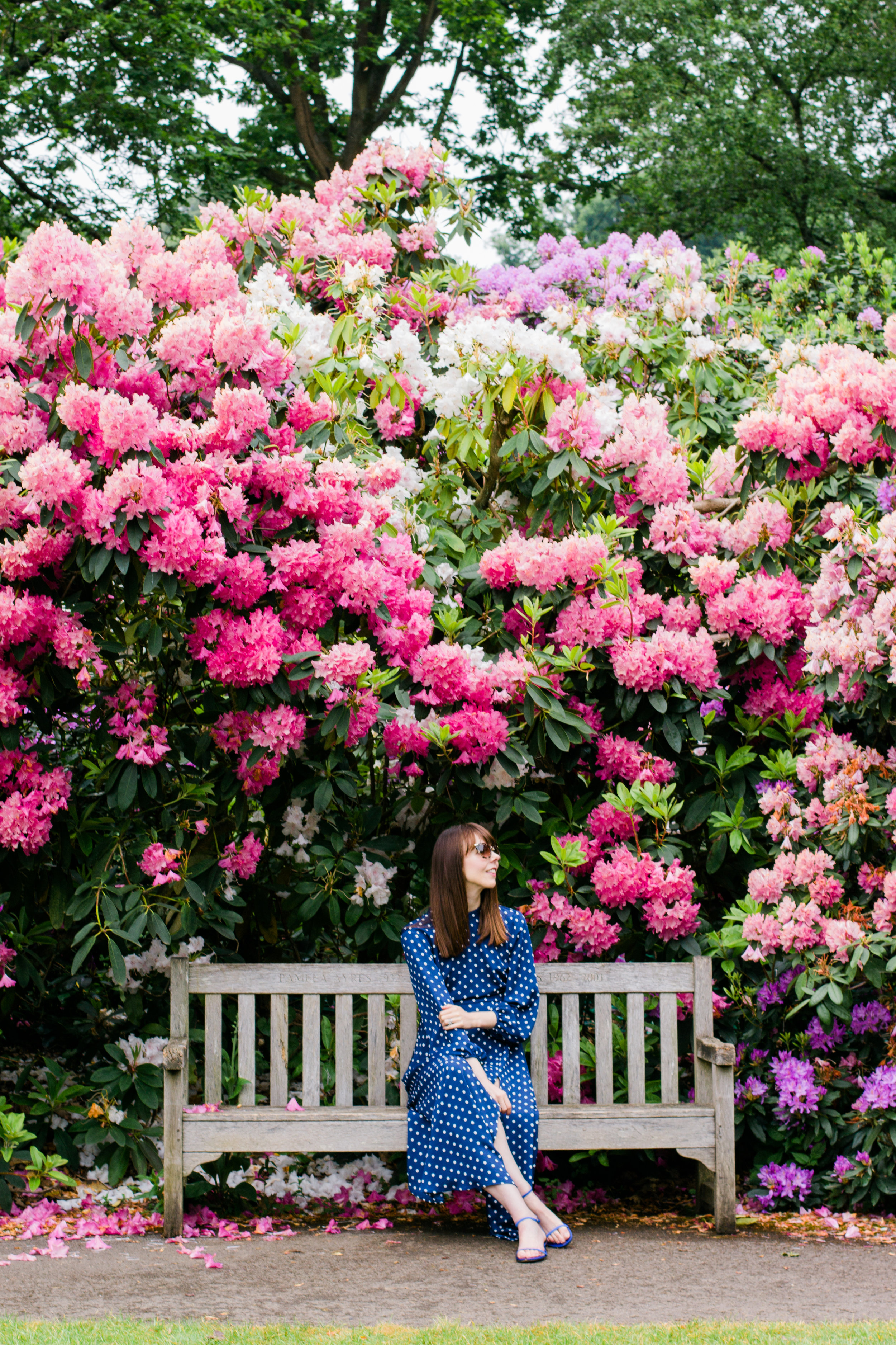 Pink and purple rhododendron flowers at Kenwood House, Hampstead Heath, London | Sundays and Somedays
