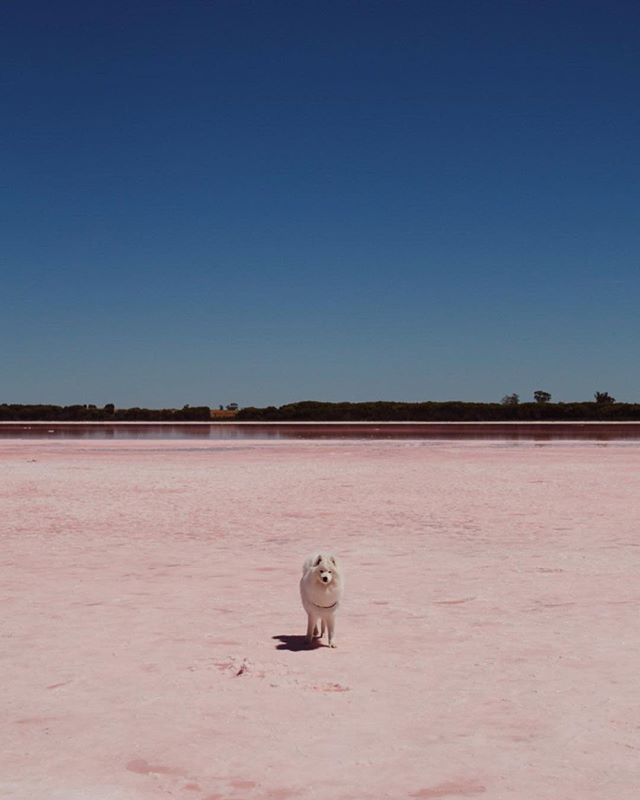 A salty pink lake, one white fluffy dog and some friendly bikies.