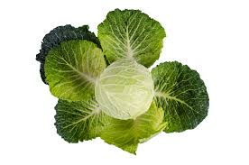 Green Cabbage.jpg