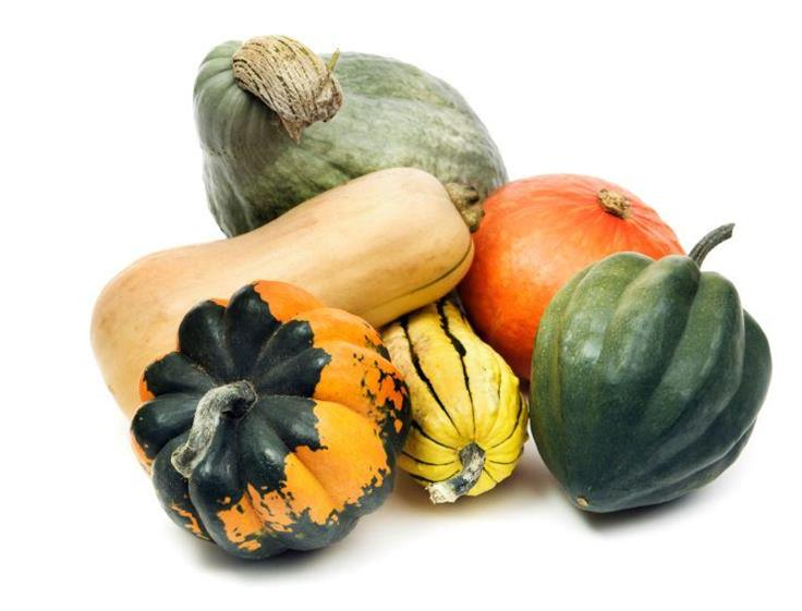 Harvest of the Month - Squash Info.Click Here