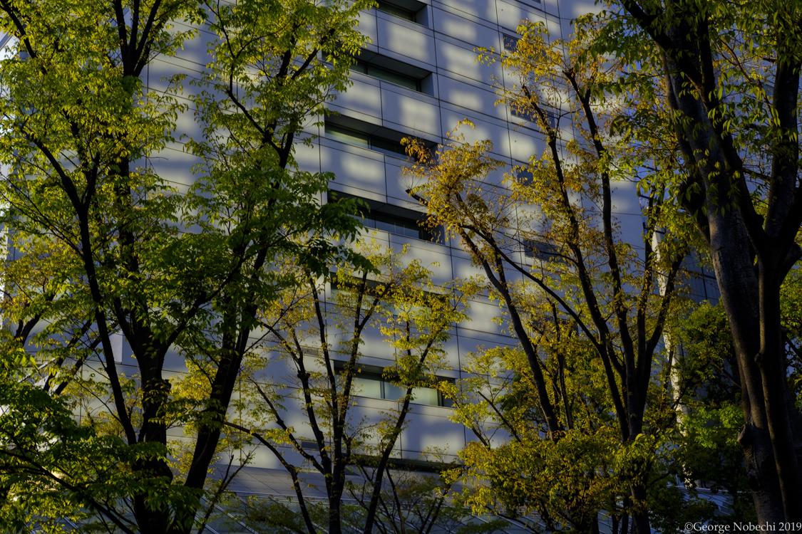 Tokyo-Workshop-Ibarionex-Additional-0006.jpg