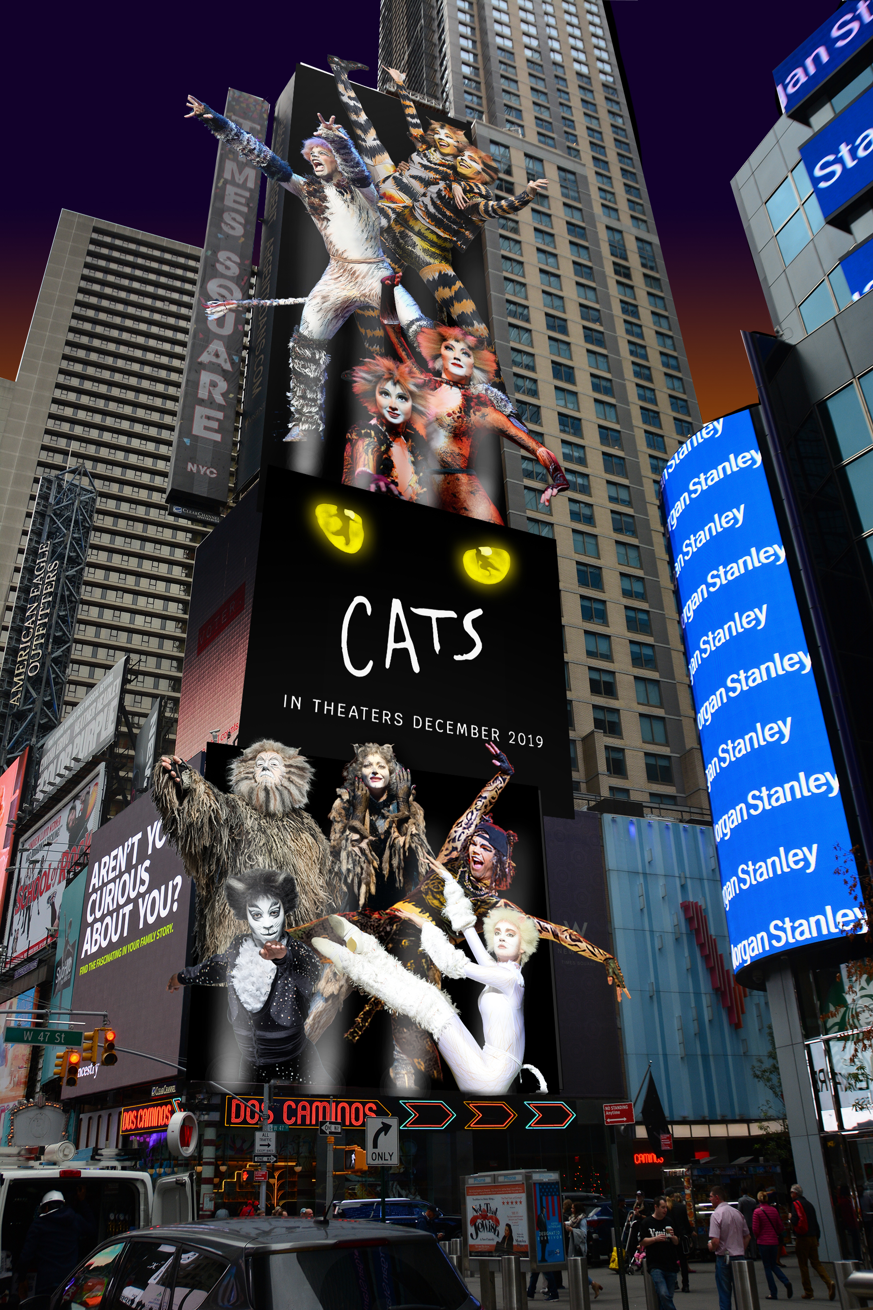 CCO_Cats_Universal_144-135-136_night.jpg