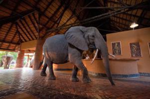 elephants in the main lodge.jpg