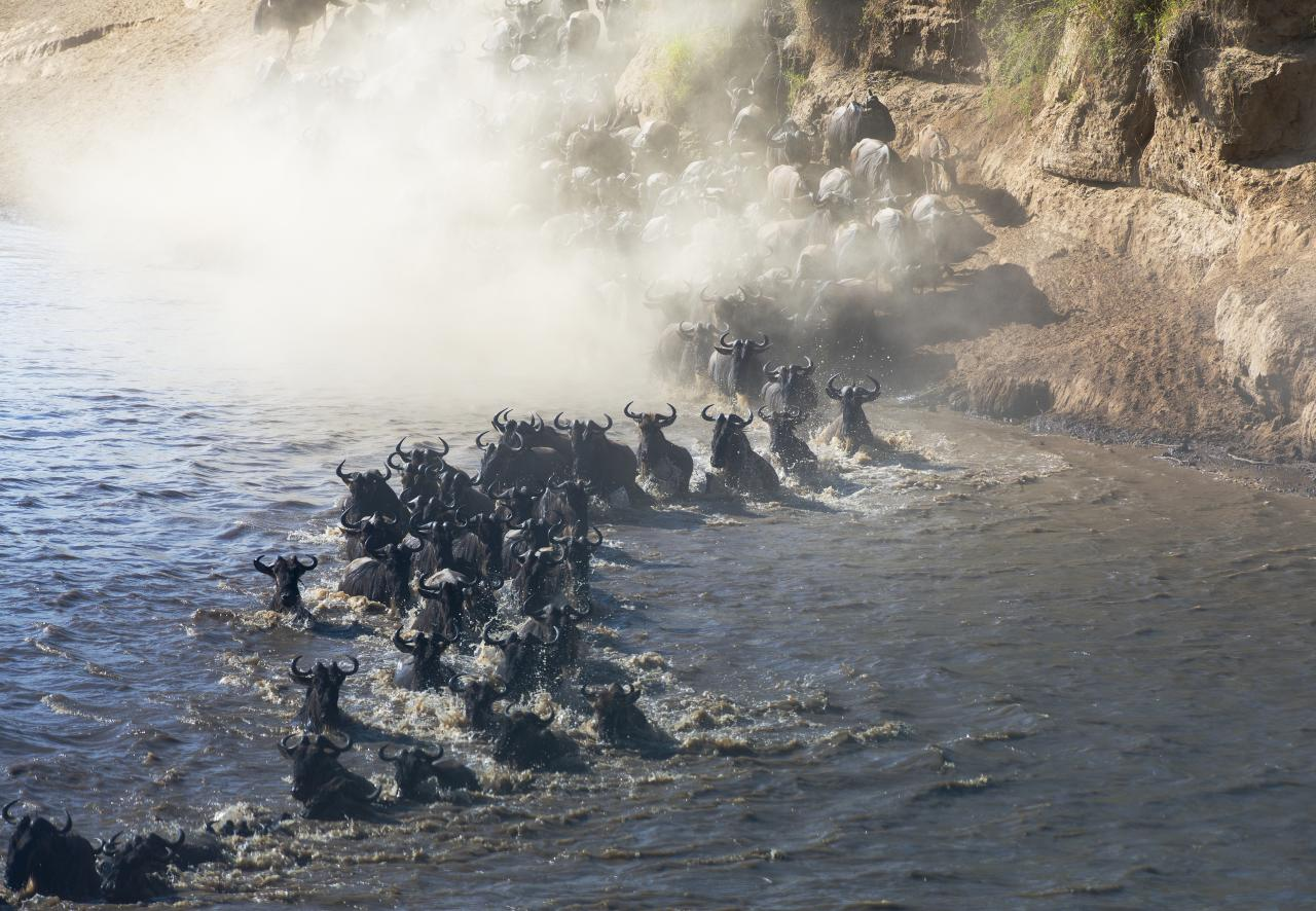 Migrating_wildebeest_on_the_Masai_Mara.jpg