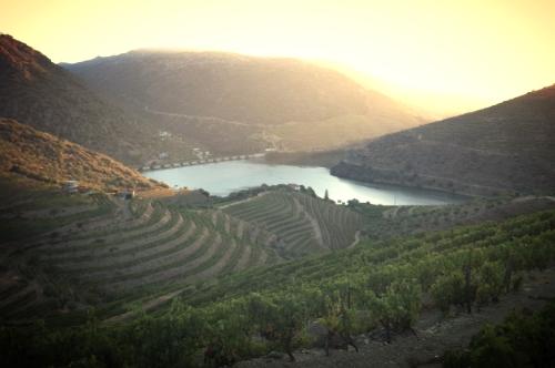 Portuguese wine regions
