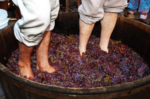 Wine processing in Portugal