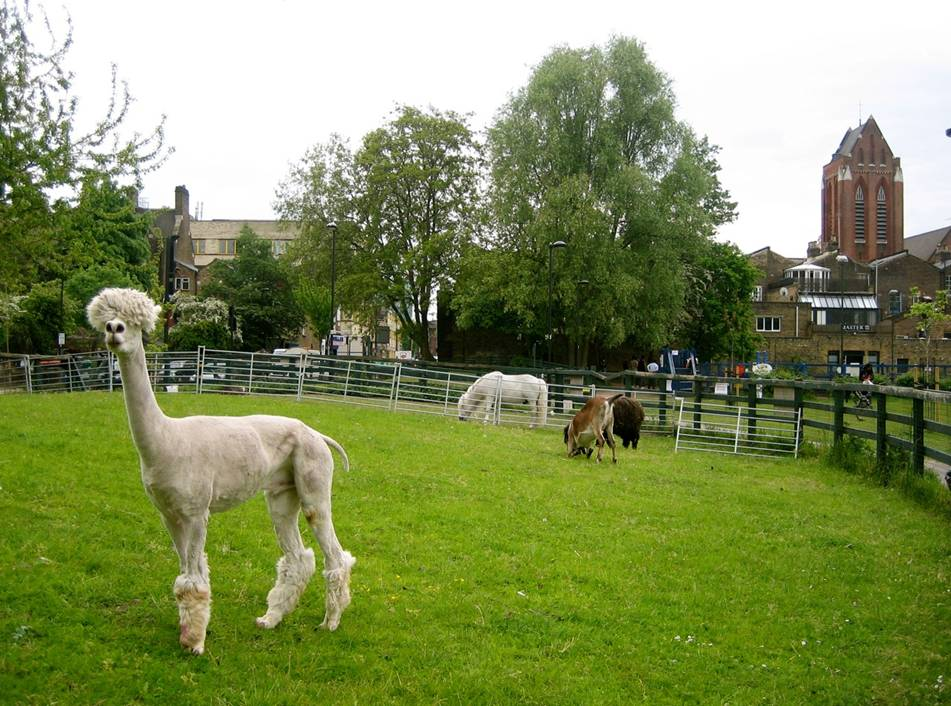 Jerry and friends in the paddocks
