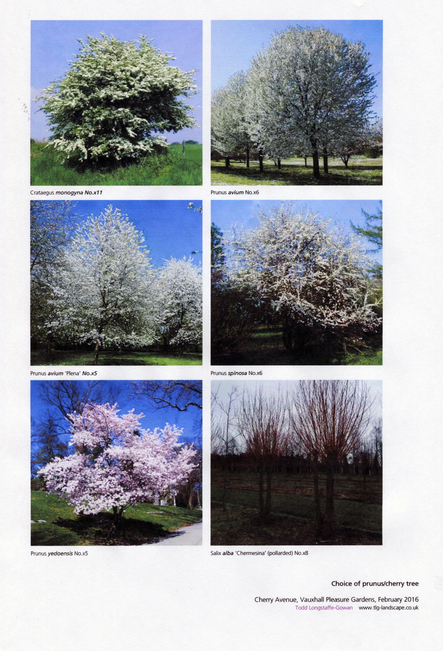 Proposed various tree varieties
