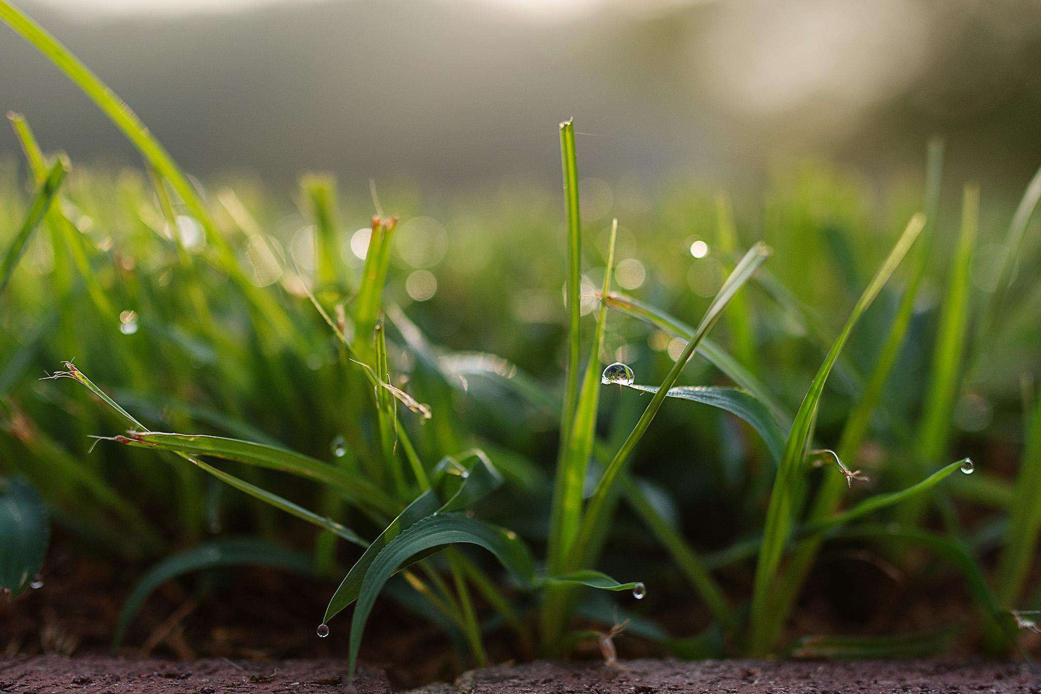 D15_6504_073015 crop.jpg
