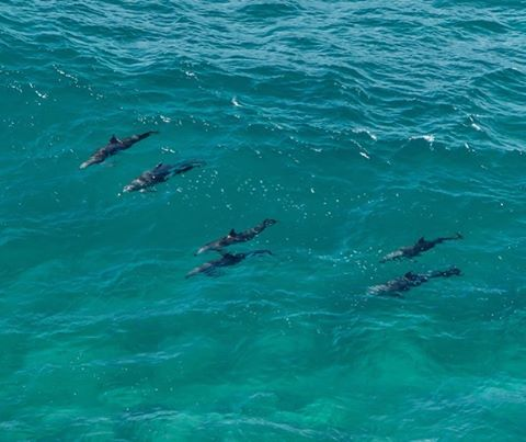 Not sure whether someone has a soul? No worries, we have the answer! Simply watch their reaction when they first see wild dolphins in the water. No smile = definitely no soul. #yourewelcome 🐬🐬🐬 seen in #ByronBay, NSW, Australia