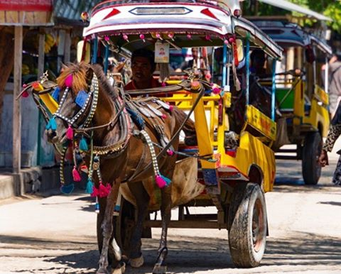One of those ponies I was telling you about. These petite horses are one of the fastest methods of transportation on #GiliT, an island without cars or motorbikes. #travelfacts #theyearbetween