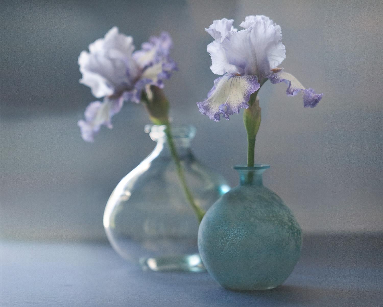 Irises, Sinar/Wollensac system