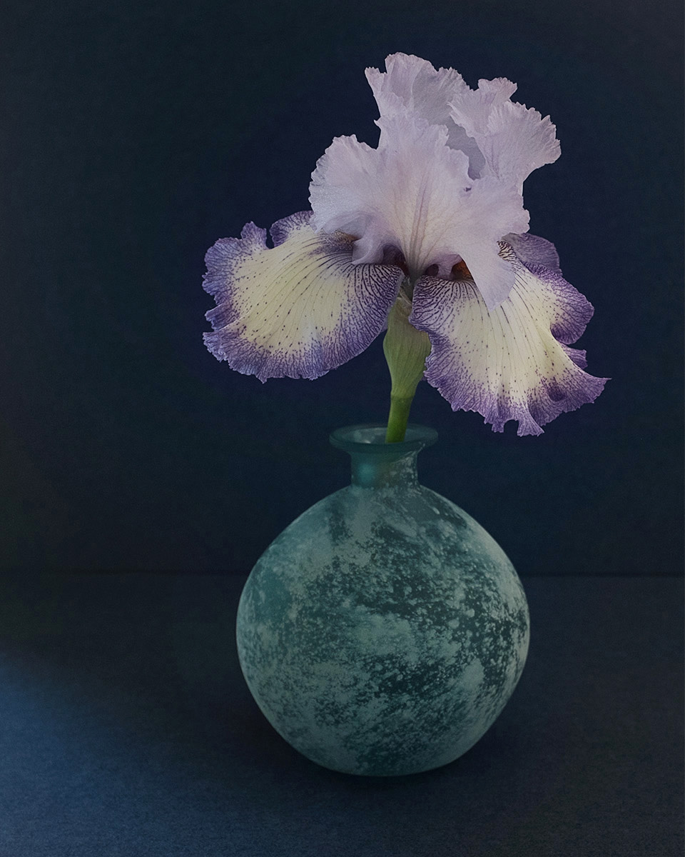 Iris in a Blue Vase, Fuji X100s