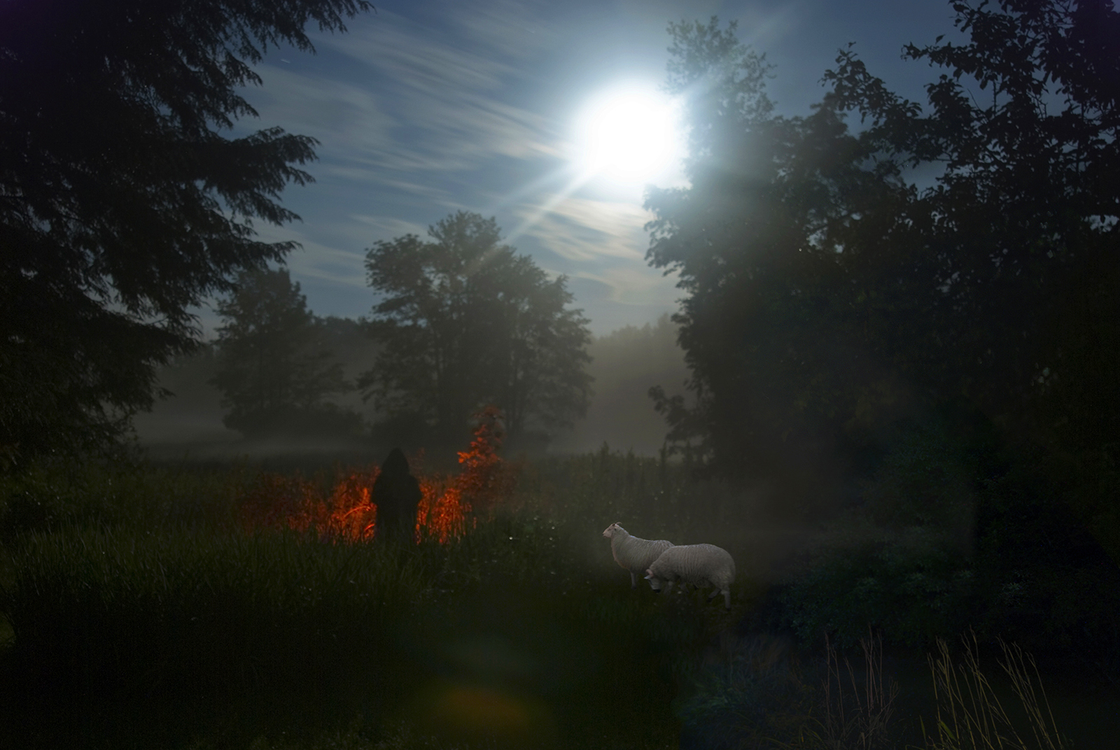 Kay Kenny  Full Moon in the Meadow with Sheep