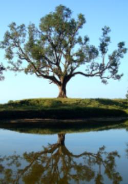 Nepal Tree.png