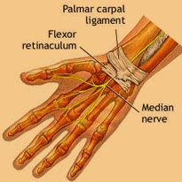 flexor-retinaculum.jpg
