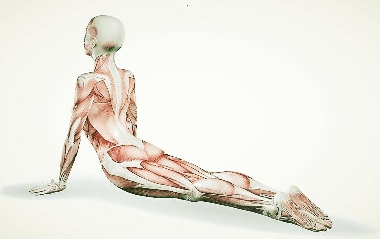Yoga-Anatomy-3.jpg