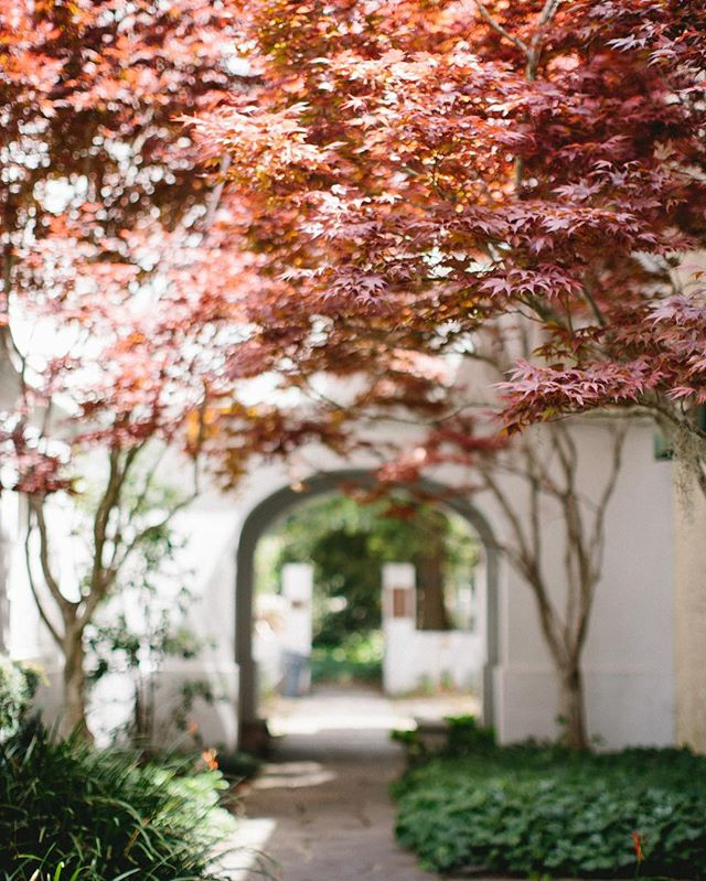 Missing magical, walkable cities like Charleston today. ✨ I get my walking in these days by checking our mail and returning things at the mall 😂. Anyone have any good tips for tricking themselves into walking more? . . . . . . . . #charleston #charlestonsc #southernweddings #ourstatemag #ourstatemagazine #marthastewartweddings #raleighnc #northcarolinawedding #raleighweddingphotographer #raleighbride