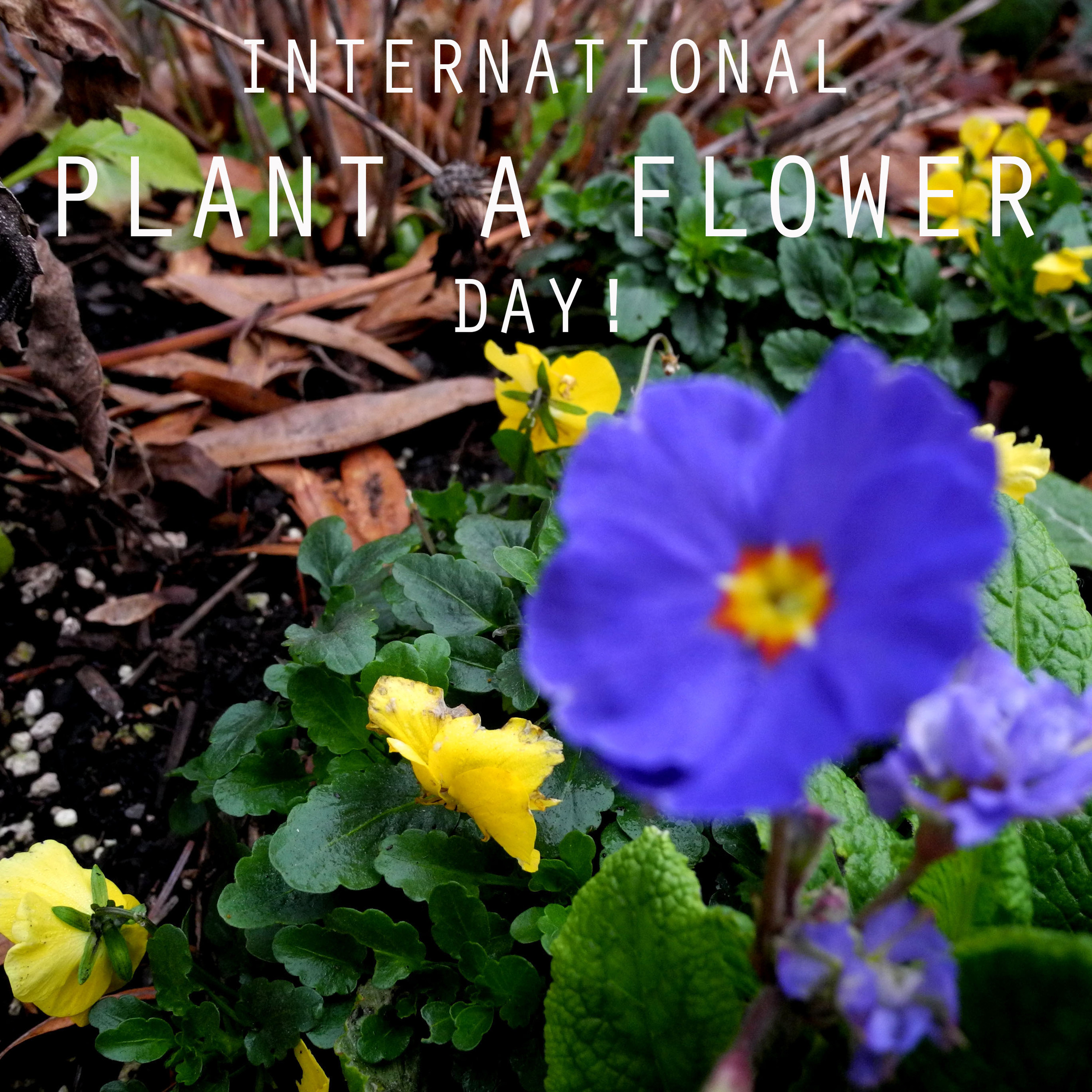 Promotional advertising campaign via Envision Magazine's Instagram. The campaign raises awareness for International Plant a Flower Day.  Photography and design by Madison D. Cameron