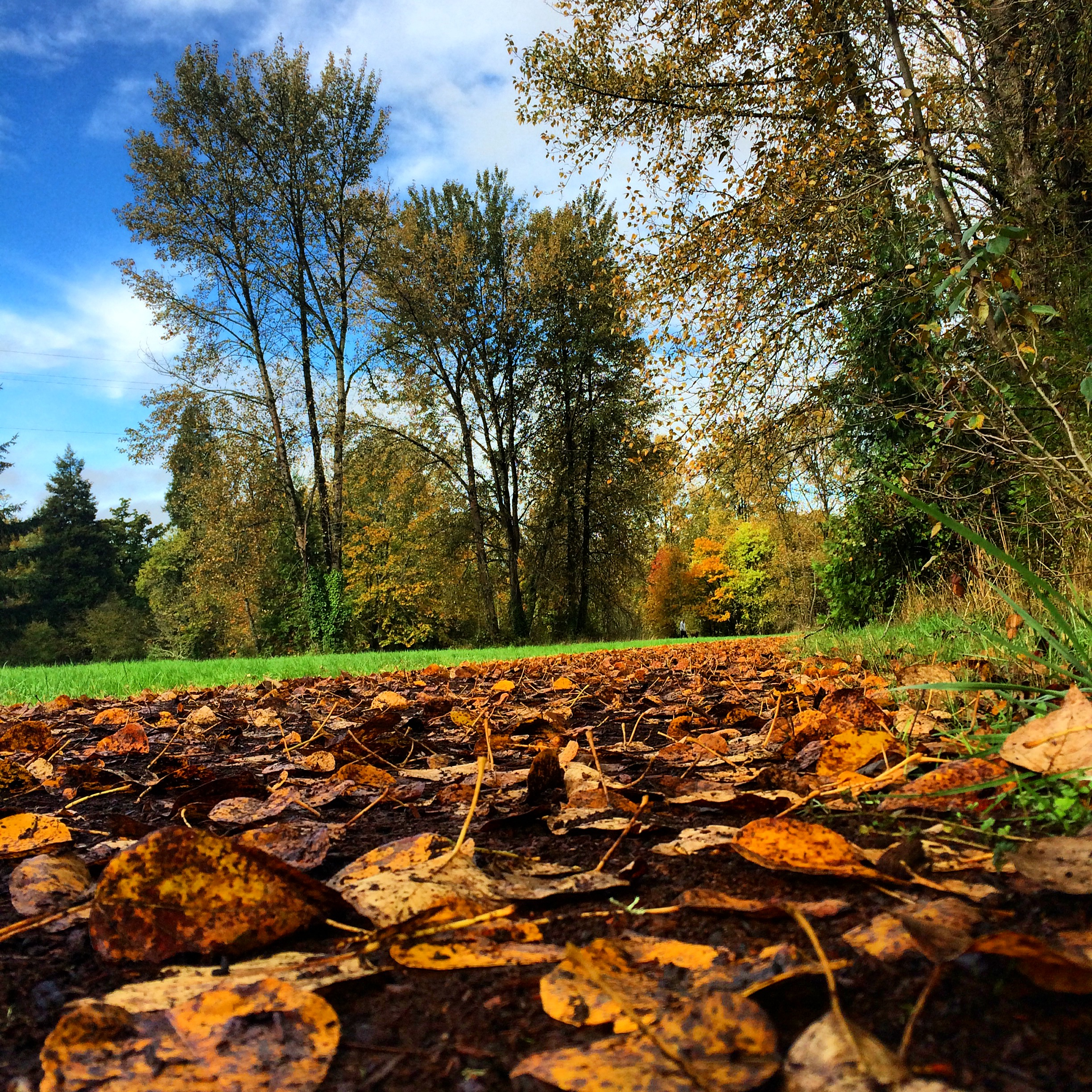 The view from a running shoe along trails through the University of Oregon.