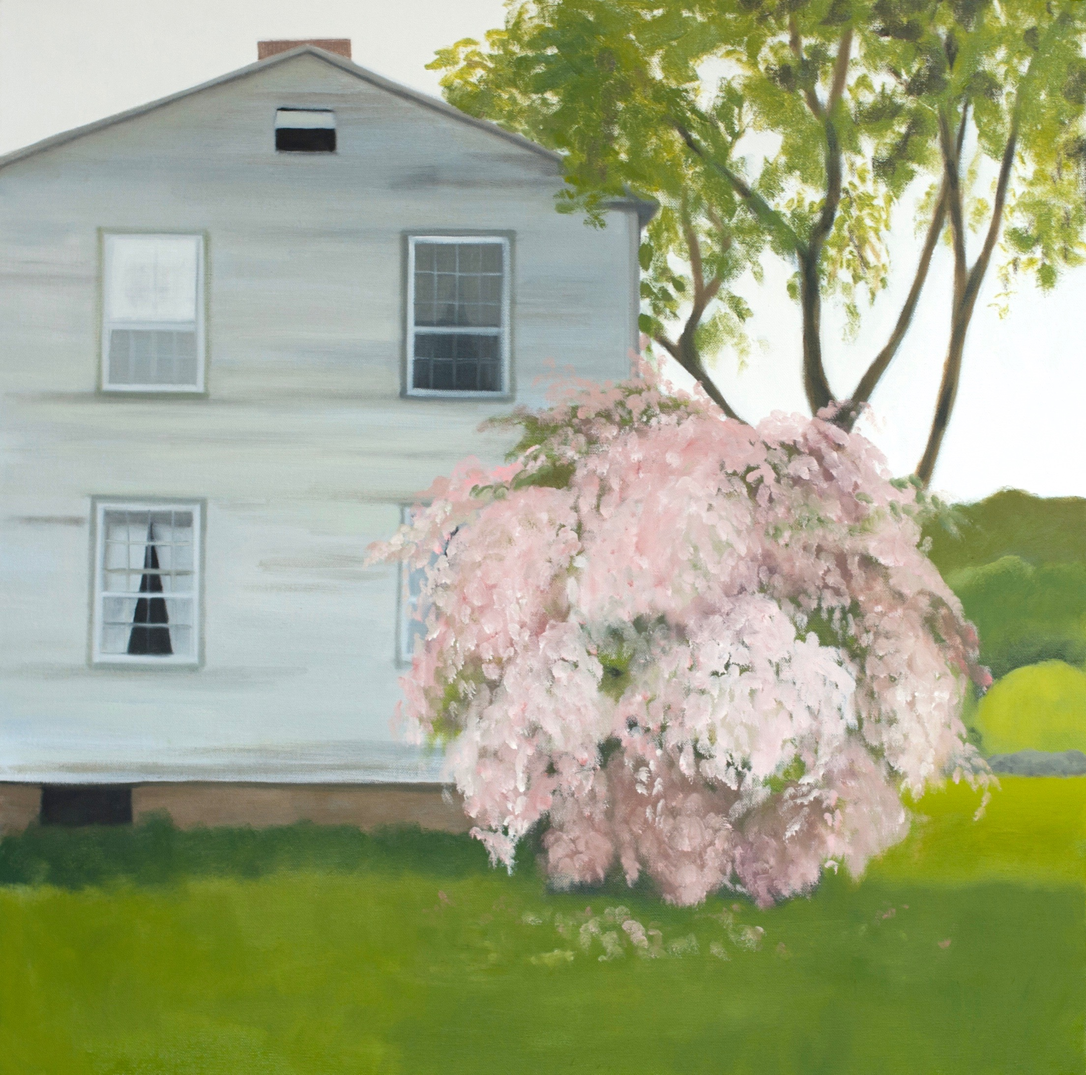 Beauty bush. 30 x 30 inches, oil on canvas. (N/A)