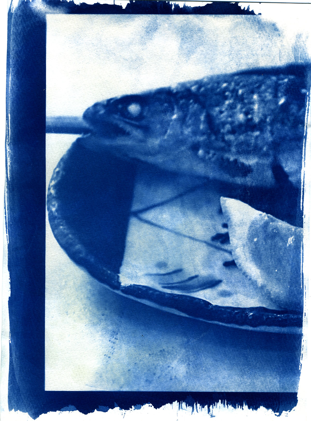 ARRcyanotype_fish1.jpg