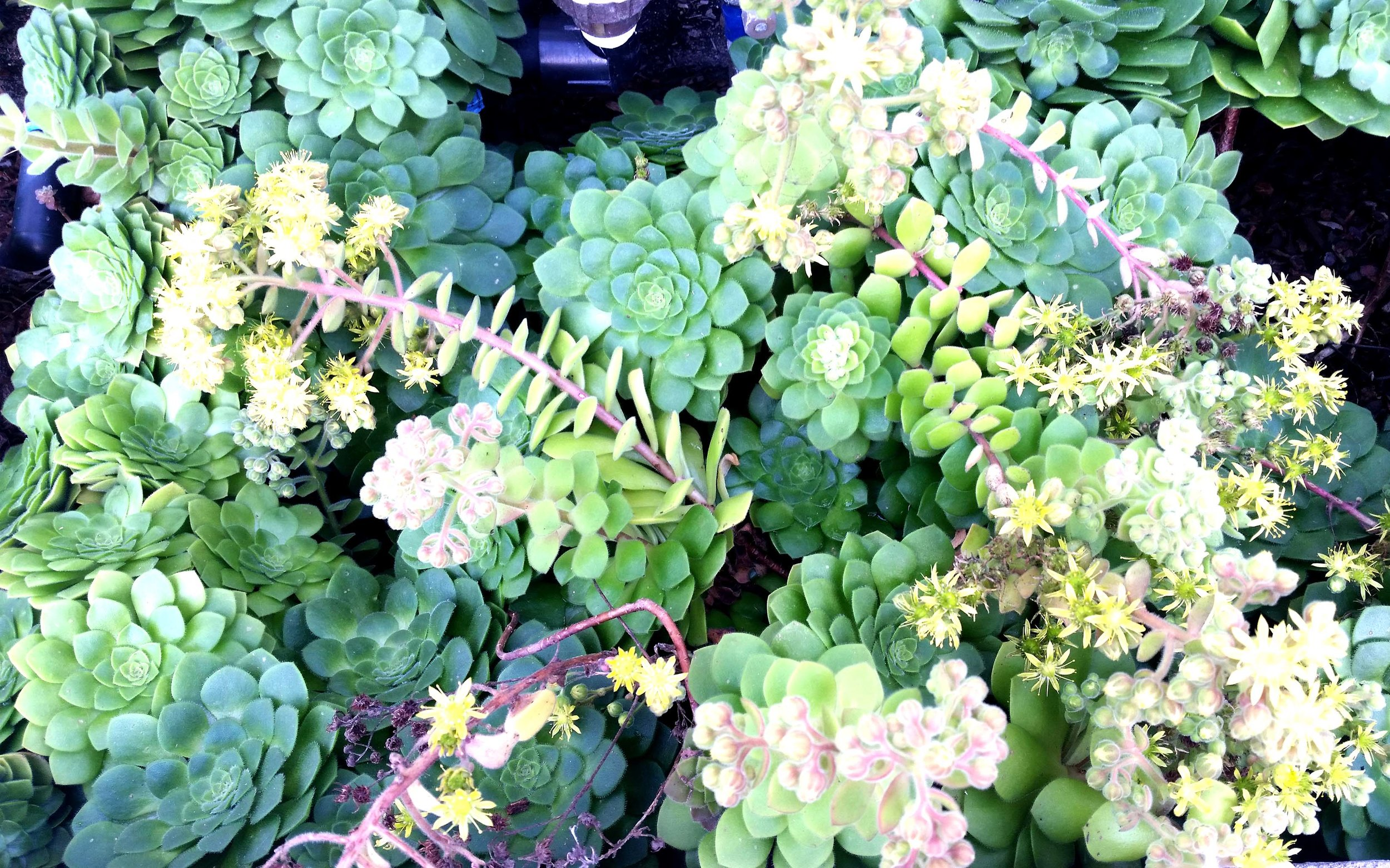 plant inspiration sf.jpg