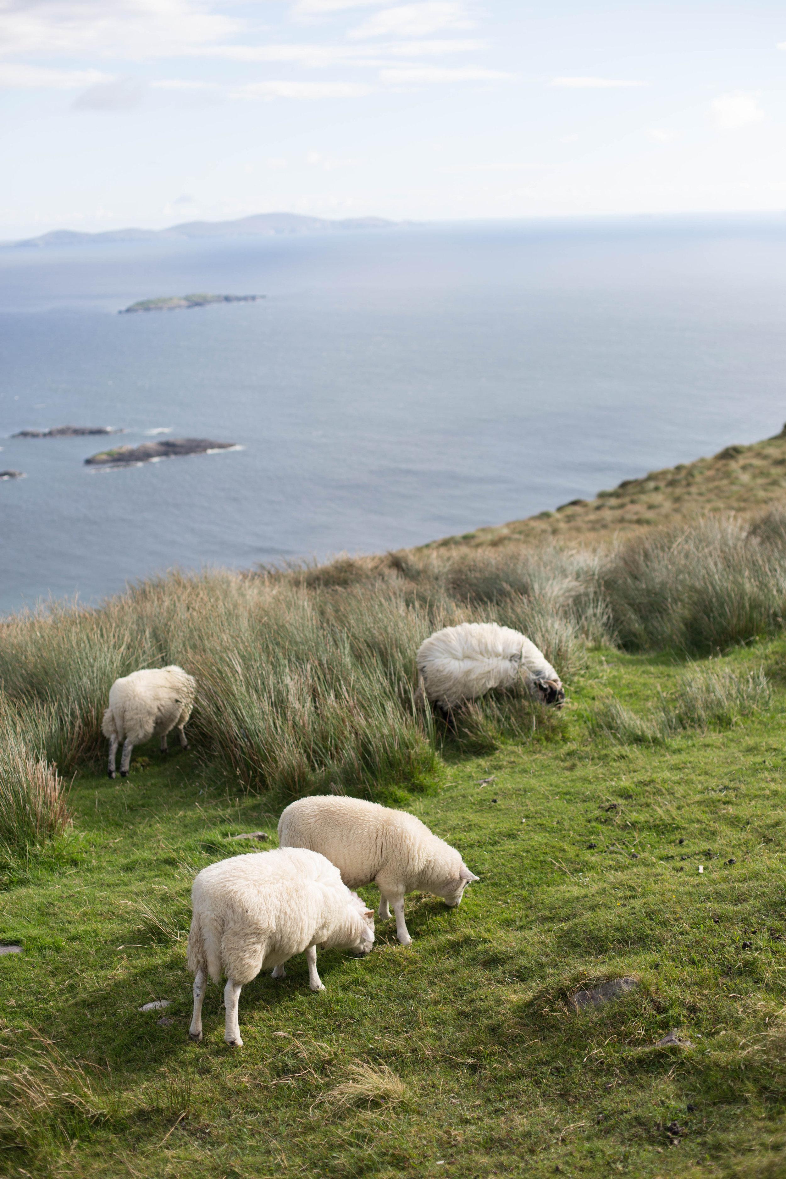 Ireland-Ireland-0053.jpg