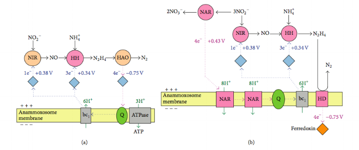 Metabolic Pathways By Shou-Qing Ni and Jian Zhang [CC BY 3.0 (https://creativecommons.org/licenses/by/3.0)], via Wikimedia Commons